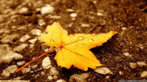 autumn-leaf-wallpaper